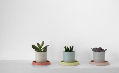 Laura Magahy - Ase succulent pots x 3