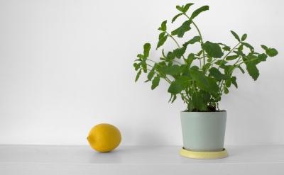 Laura Magahy - Ase plant pot 2
