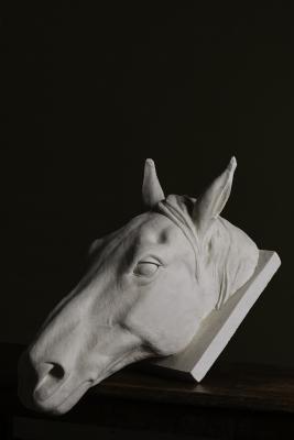 Horse portrait by tom nicholls