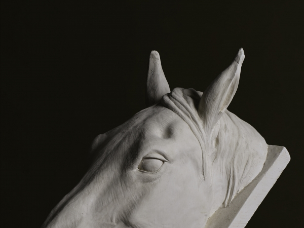 Horse portrait by tom nicholls