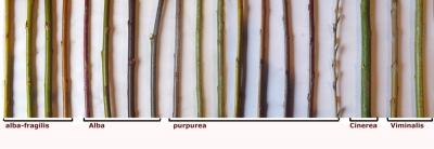 Andrea Magnolini - Varieta 2014 con specieweb