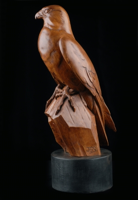 Peregrine falcon in boxwood - Julian Stanley