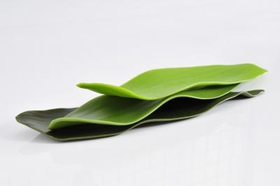 Luesmavega plate for albertadria pakta name bamboo