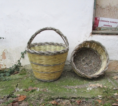 Andrea Magnolini - Ulivo e canna