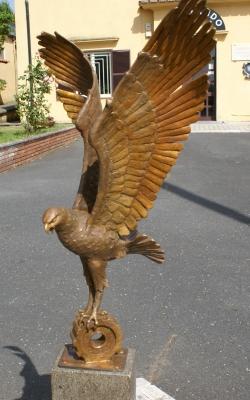 Falco savini3