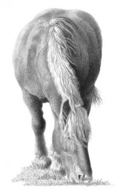 Dessins cheval comtois